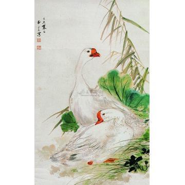 田世光己未(1955)年作白鹅芦苇图立轴